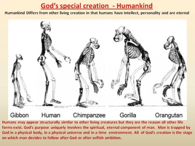 theoryoforganicevolution